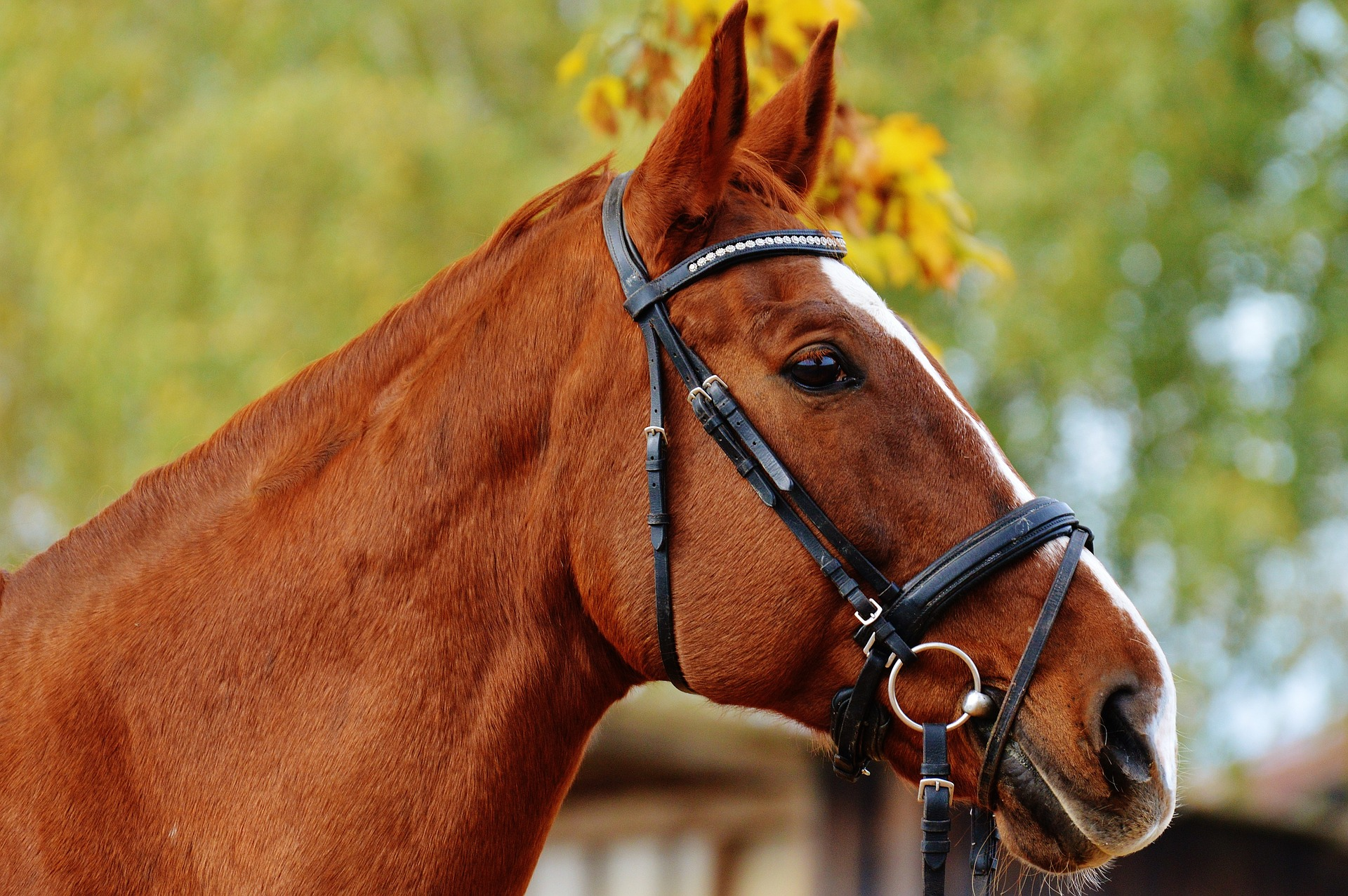 horse-1006568_1920